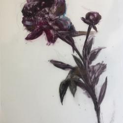 Madeleine Lamont - Purple Peony 2017