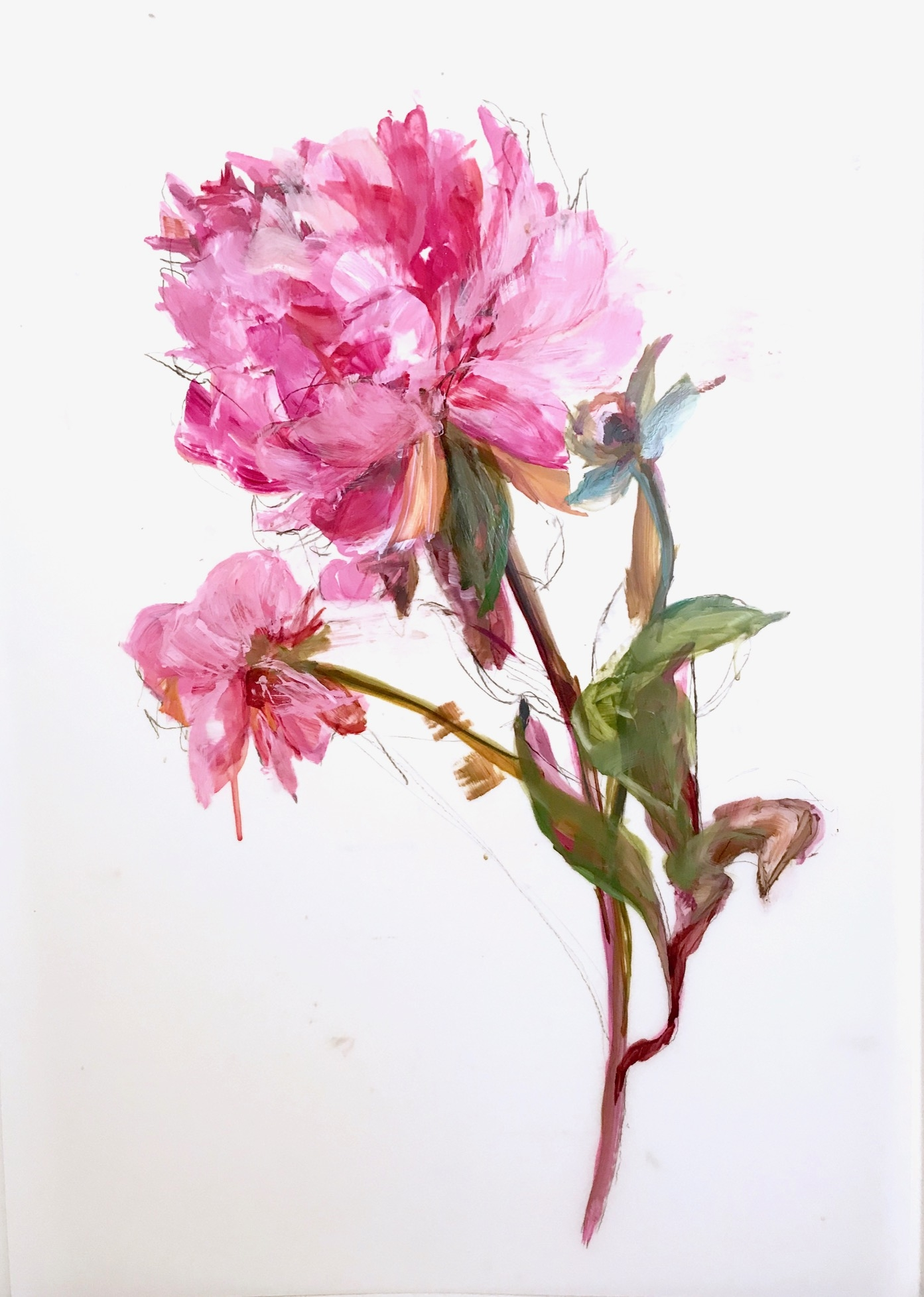 Magenta Peonies 4 by Madeleine Lamont