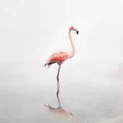 Alice  Zilberberg - For Now Flamingo