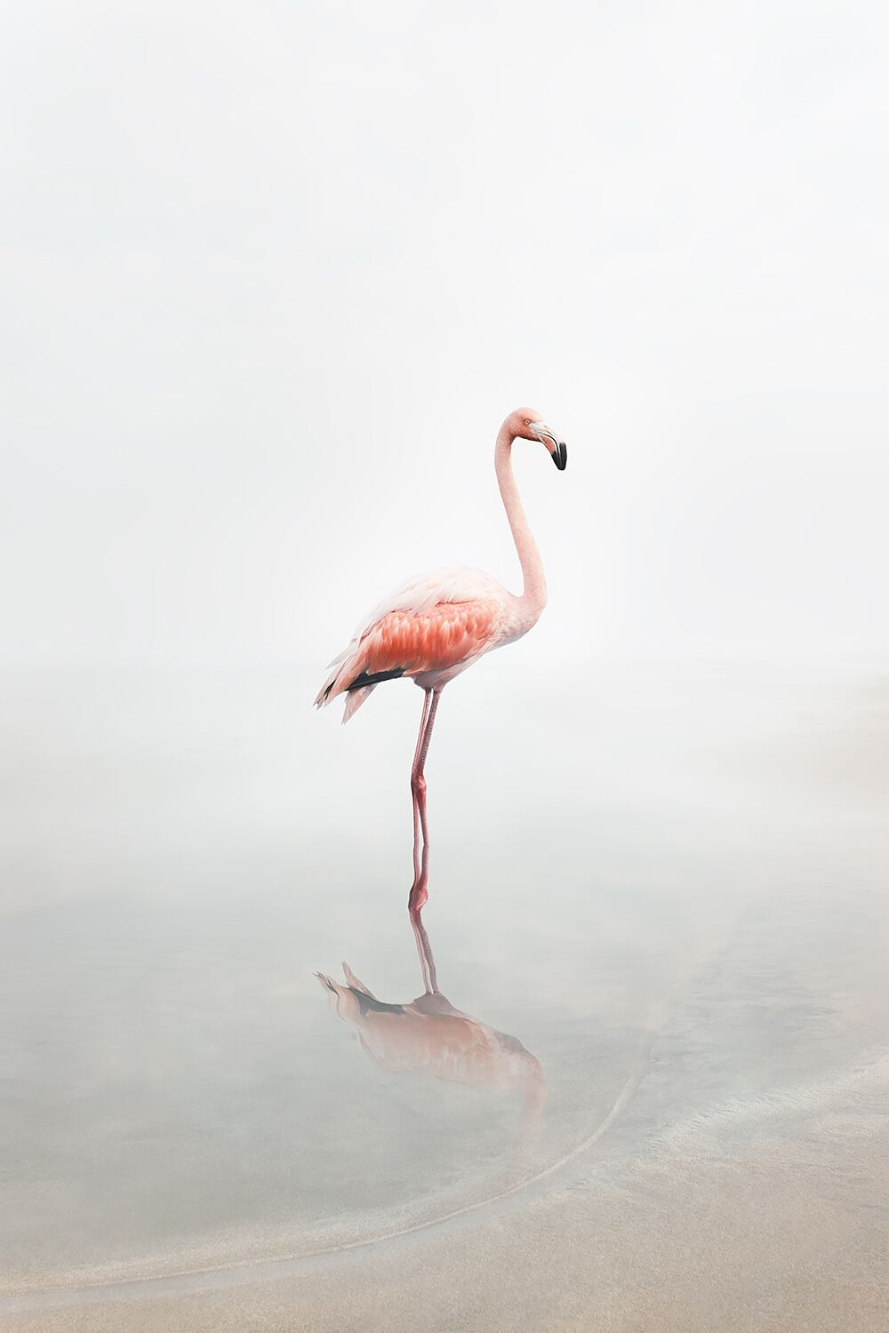 For Now Flamingo  by Alice  Zilberberg