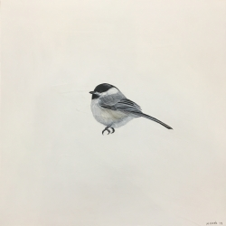 Heather  Cook  - Chickadee