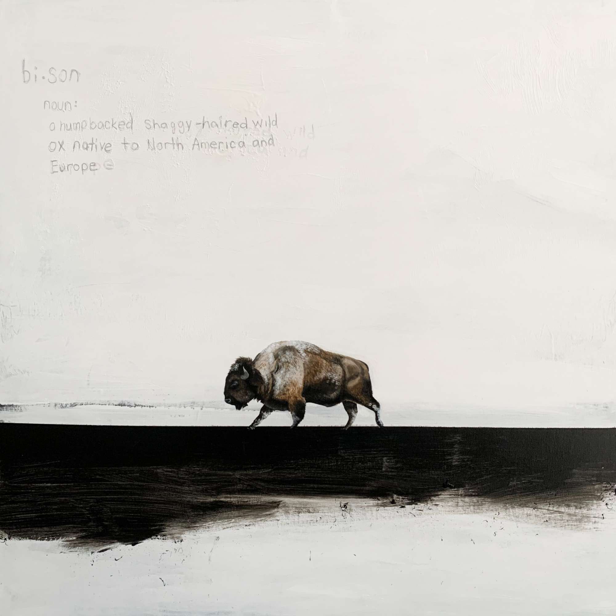 Bison  by Heather  Cook