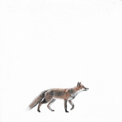 Heather  Cook  - Sly Fox