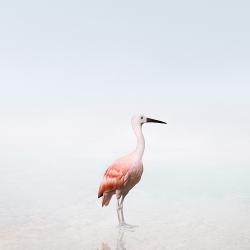 Alice  Zilberberg - Surrender Scarlet Ibis