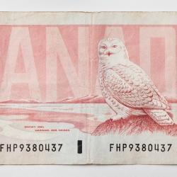 Peter Andrew - 50 Dollar Bill
