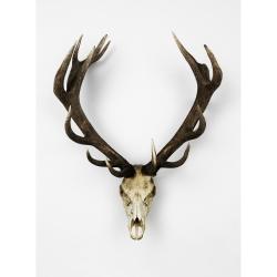 Anna Church - Oh Deer