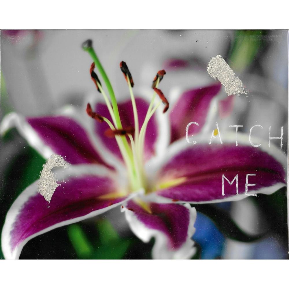 Catch Me by Talia Shipman
