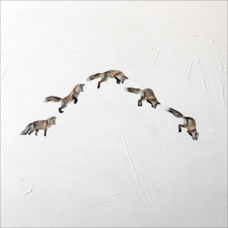 Heather  Cook  - Pounce