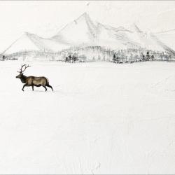 Heather  Cook  - Mountain Elk