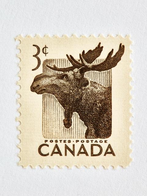 Wildlife Week Stamp- Moose by Peter Andrew