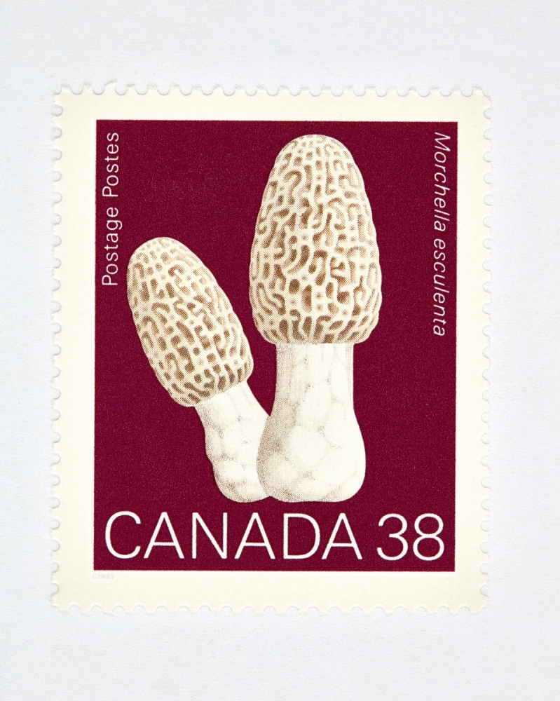 Canada 38 Mushroom Stamp (Red)  by Peter Andrew