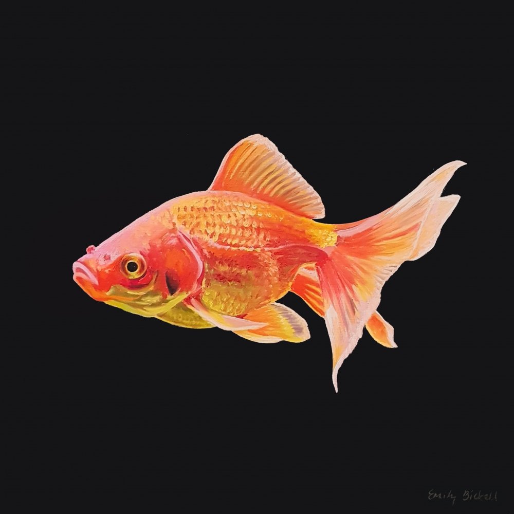 Goldfish 2 by Emily Bickell